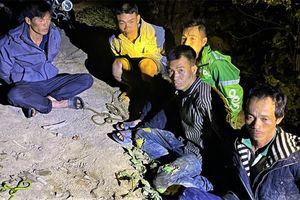 Bắt giam chín đối tượng khai thác, vận chuyển trái phép gỗ pơ-mu quý hiếm ở Đắk Lắk