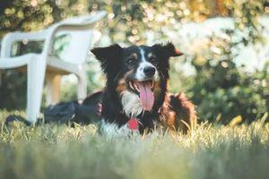 Chủ đột nhiên qua đời, chú chó trở thành triệu phú sau một đêm