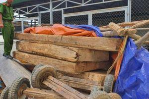 Đắk Lắk: Phát hiện gỗ Pơ Mu bị khai thác trái phép, tạm giữ 9 đối tượng vi phạm