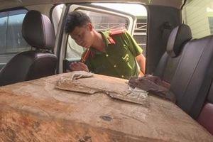 Bắt giữ nhóm lâm tặc chặt phá rừng Pơ mu ngày Tết