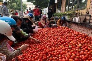 Tạo điều kiện cho phương tiện chở hàng nông sản từ Hải Dương đi các tỉnh