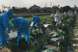 Nỗ lực 'giải cứu' hơn 90.000 tấn nông sản Hải Dương