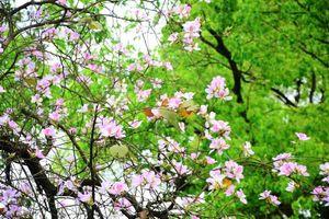 Thời tiết 22-2: Hà Nội đón tiết trời nắng ấm ngày đầu tuần