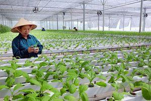 Đổi mới phương thức kinh doanh tiêu thụ nông sản giai đoạn 2021-2025