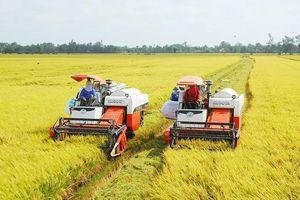 Giá lúa tăng cao, nông dân phấn khởi trúng mùa trúng giá