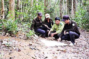 Chuyện những người giữ rừng giữa ngày Xuân
