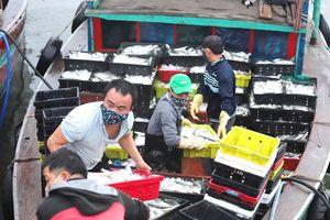 Ngư dân miền Trung trúng đậm hải sản