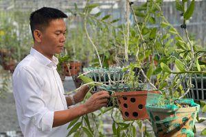 Nghệ nhân Vinh Phạm và giá trị của vườn lan khủng