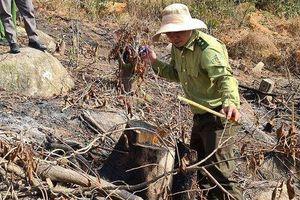 Phát hiện vụ phá rừng phòng hộ ở Lâm Đồng