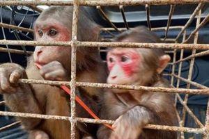 Vườn Quốc gia Vũ Quang (Hà Tĩnh): Thả cá thể khỉ mặt đỏ và trăn đất về môi trường tự nhiên