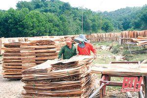 Phát triển cây công nghiệp lợi thế gắn với các nhà máy chế biến ở miền núi