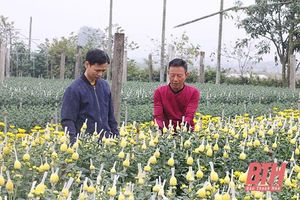Phường Đông Lĩnh ưu tiên tích tụ đất đai, sản xuất nông nghiệp quy mô lớn