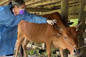 Năm 2021, dự kiến sản lượng thịt các loại đạt 5,7 triệu tấn