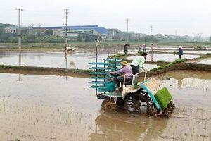 Huyện Thạch Thất: Hoàn thành trên 80% diện tích gieo trồng lúa vụ Xuân Hè