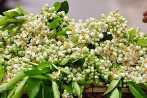 Hoa bưởi nồng nàn khắp phố phường Hà Nội
