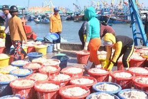 Đầu năm ngư dân Bình Định trúng đậm ruốc biển
