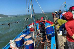 Ngư dân thị xã Sông Cầu được mùa ruốc biển