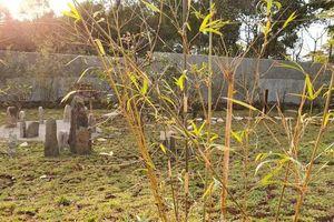 Có gì trong khu vườn chữa lành gần 1ha Trung Nguyên Legend?