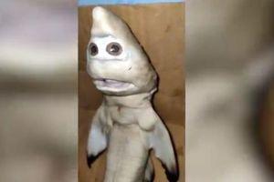 Indonesia: Ngư dân sửng sốt khi bắt được cá mập đột biến có hình mặt người