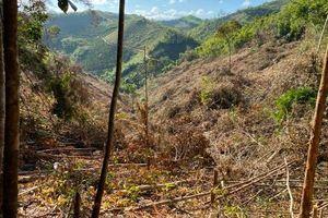Triệu tập 20 đối tượng liên quan vụ phá trắng gần 2ha rừng ở Đắk Nông