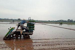 Hà Nội gieo cấy được hơn 45.000ha diện tích lúa vụ xuân