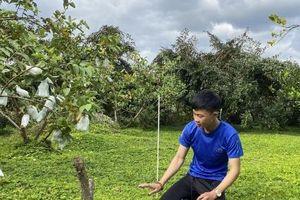 Lợi ích từ thảm thực vật trong vườn cây ăn trái