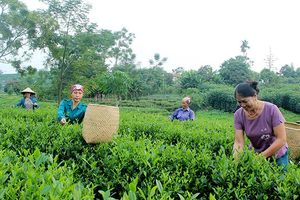 Thái Nguyên nâng cao hiệu quả hoạt động của hợp tác xã