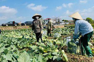 Hơn 50 doanh nghiệp hỗ trợ Hải Dương tiêu thụ gần 11 nghìn tấn rau và thực phẩm
