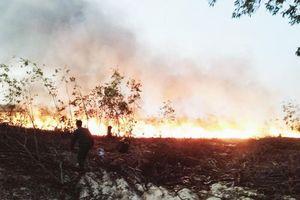 Hơn 100 người dập vụ cháy rừng trồng ven biển