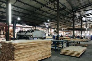 Yên Bái: Tiếp sức cho công nghiệp chế biến gỗ