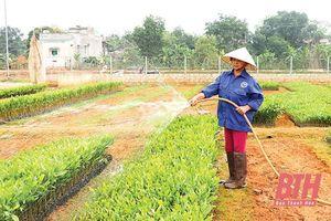 Huyện Triệu Sơn phát triển nông nghiệp sản xuất hàng hóa lớn, công nghệ cao