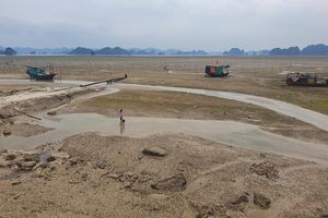 Tự ý đổ đất lấn vịnh Bái Tử Long, doanh nghiệp bị phạt 100 triệu đồng