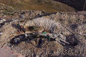 Phát hiện cây hóa thạch quý hiếm 20 triệu năm tuổi