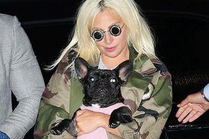 Hai chú chó của Lady Gaga được tặng đồ hiệu, đi máy bay riêng