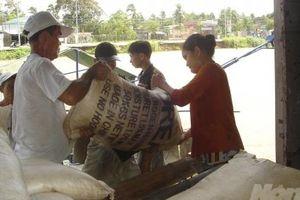 Giá phân bón tăng mạnh, nguy cơ thiếu hụt trầm trọng DAP