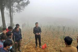 Phát miễn phí 17 tấn cây giống tam thất nam cho đồng bào vùng cao