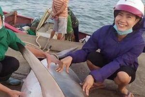 Bắt được 'thủy quái' Biển Đông nặng 1,5 tạ gần đảo Cồn Cỏ