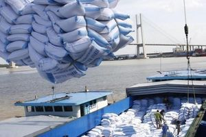 Xuất khẩu ngày 23-26/2: Gạo xuất ngoại giảm 36%; khó khăn kết nối cung cầu; người Canada thích đồ gỗ Việt Nam