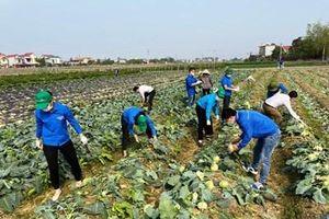 Hải Dương chung tay hỗ trợ tiêu thụ nông sản cho bà con nông dân