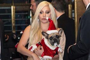 Lady Gaga được trả lại chó cưng