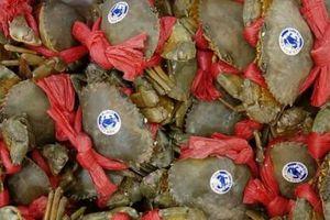 Cua Năm Căn, lẩu mắm U Minh vào Top 100 món ăn đặc sản Việt Nam