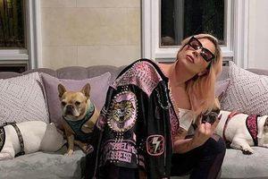 Chó cưng an toàn sau khi Lady Gaga treo thưởng 'khủng'