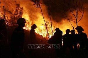 Lai Châu: Cháy rừng bùng phát và lan rộng tại huyện Tam Đường