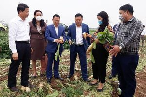 Hà Nội hỗ trợ các quận, huyện cần 'giải cứu' nông sản
