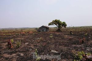 Hơn 22 nghìn ha rừng ở Đắk Lắk bị xóa sổ ra sao?