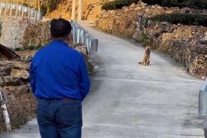 Khoảnh khắc chú chó già từ biệt chủ nhân trước khi rời nhà tìm nơi qua đời gây xúc động