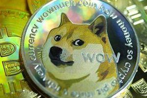 Đưa chó lên mặt trăng và nghịch lý làm giàu thời Covid