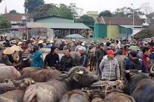 Chuyện lạ ở chợ trâu bò lớn nhất Việt Nam