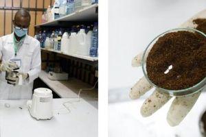Biến châu chấu sa mạc thành thức ăn gia súc và phân hữu cơ
