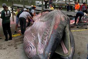 Xác cá khổng lồ gần 30 tấn dạt vào bờ biển: Chuyên gia phát hiện 2 điều bất thường